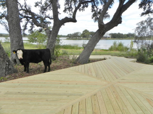 Deck and a cow